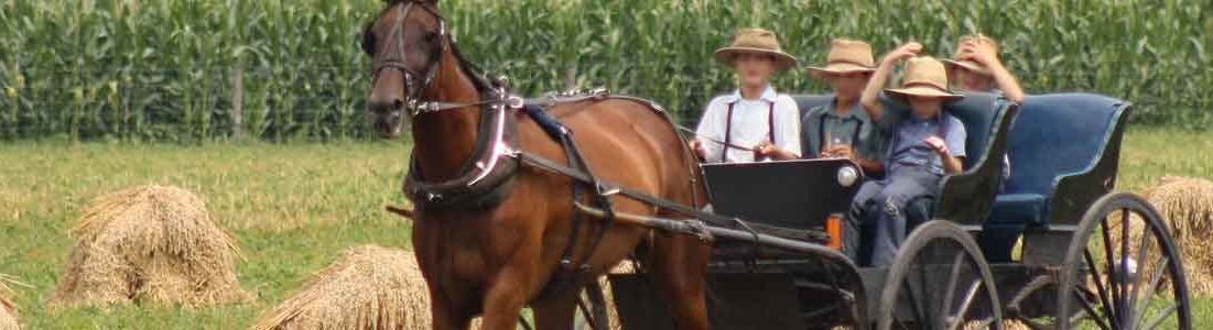 Amish Illinois